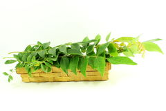 Indian herb curry leaves or curry patta closeup on white background Royalty Free Stock Photography