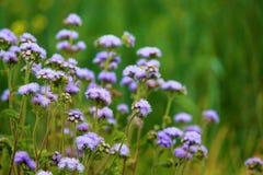 Indian herbs Stock Photos