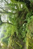 Lush tropical rain forest in the Himalayas Royalty Free Stock Images