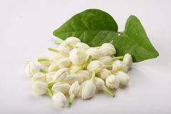 Indian jasmine flower with leafs. Stock Images