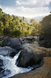 Indian jungle with shallow river between stones Stock Photos