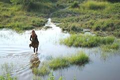 Indian Lady. Stock Image