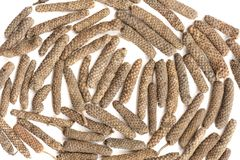 Indian long pepper, Piper longum isolated Stock Photos