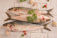 Indian mackerel fish garnished with coriander leaf , garlic and slice of red and green chilli pepper. Stock Photography