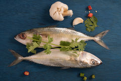 Indian mackerel fish garnished with coriander leaf , garlic and slice of red and green chilli pepper Stock Images