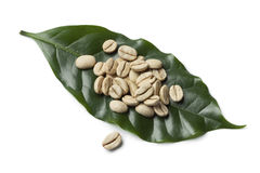 Indian Malabar green unroasted coffee beans Royalty Free Stock Image