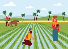 Indian male and female farmers working in paddy field flat cartoon style. Vector illustration on landscape background. Man plowing agricultural land with vector illustration