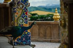 Male peacock is walking in shrine royalty free stock images