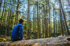 A man alone in forest royalty free stock photo