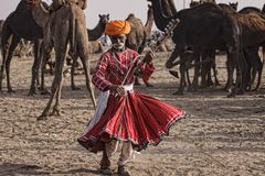 Old Rajasthani man dances against the background of his camels royalty free stock images