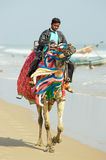 Indian man and camel Royalty Free Stock Image