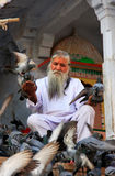 Indian man feeding pigeons near holy lake, Pushkar, India Stock Images
