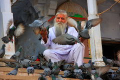 Indian man feeding pigeons near holy lake, Pushkar, India Stock Photography