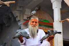 Indian man feeding pigeons near holy lake, Pushkar, India Royalty Free Stock Photo