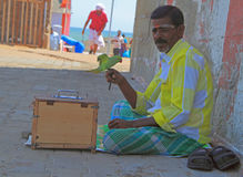Indian man holds a parrot in street Royalty Free Stock Photography