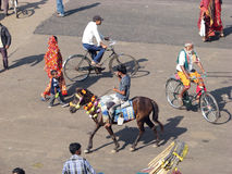 Indian man and horse Stock Image