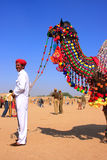 Indian man standing with his decorated camel at Desert Festival, Stock Photo