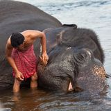 Indian man washing his elephant Stock Photos
