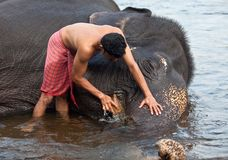 Indian man washing his elephant Royalty Free Stock Images
