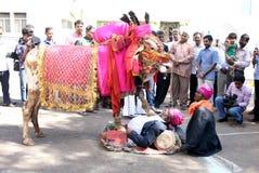 Indian Master show in Gangireddu aata. Indian Master show the bovine and human coordination during Gangireddu aata in sankranti festival season in Hyderabad Royalty Free Stock Image