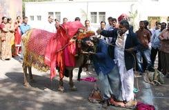 Indian Master show in Gangireddu aata Stock Photography
