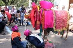 Indian Master show in Gangireddu aata Stock Photos