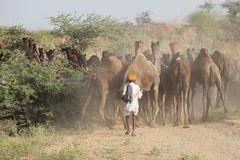 Indian men attended the annual Pushkar Camel Mela. Indian men and camels attended the annual Pushkar Camel Mela. This fair is the largest camel trading fair in Stock Photos