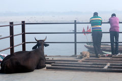 Indian men with buffalo resting on the ghat in Varanasi, India Royalty Free Stock Images