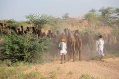 Indian men and camels attended the annual Pushkar Camel Mela. , India. PUSHKAR, INDIA - OCTOBER 28, 2014: Unidentified Indian men attended the annual Pushkar Royalty Free Stock Image