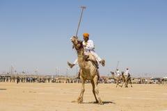 Indian men play camel polo at Desert Festival in Jaisalmer, Rajasthan, India. JAISALMER, INDIA - FEBRUARY 09, 2017 : Unidentified men play camel polo at Desert Stock Photos
