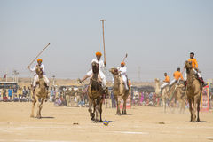 Indian men play camel polo at Desert Festival in Jaisalmer, Rajasthan, India. JAISALMER, INDIA - FEBRUARY 09, 2017 : Unidentified men play camel polo at Desert Royalty Free Stock Images