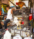 Indian men sell their chicken Stock Photos