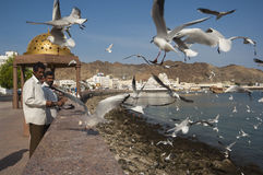 Indian migrants feed gulls in Muscat harbour Stock Photos