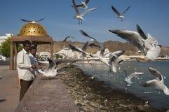 Indian migrants feed gulls Stock Photos
