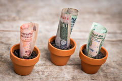 Indian money concept growth Stock Image