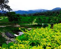 This is Indian the mountain valley and green tea garden stock photo