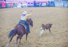 Indian national finals rodeo Stock Photography