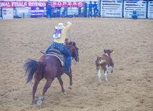Indian national finals rodeo Royalty Free Stock Images