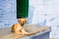 Indian Native dog Stock Photo