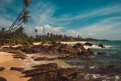 Indian Ocean Coast with stones and coconut palm trees. Tropical vacation, holiday background. Wild deserted beach. Paradise idylli. C landscape. Travel concept Royalty Free Stock Photo