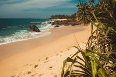 Indian Ocean Coast with stones and pandanus trees. Tropical vacation, holiday background. Wild deserted beach. Paradise idyllic la. Ndscape. Travel concept. Sri Stock Photography