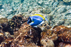 Indian ocean. Fishes in corals. Maldives Stock Photography