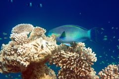Indian ocean. Fishes in corals. Maldives.  Stock Photos