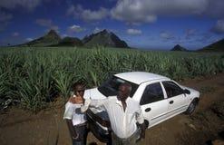INDIAN OCEAN MAURITIUS SUGAR CANE PLANATION. Sugar cane plantation on the island of Mauritius in the indian ocean stock photo