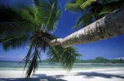 INDIAN OCEAN SEYCHELLES MAHE BEACH Royalty Free Stock Photos