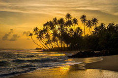 Indian ocean shore with silhouettes of palm trees. And amazing cloudy sky on sunset in Sri Lanka Stock Photography
