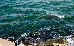 Indian Ocean  from South Mole  at Fremantle Western Australia Royalty Free Stock Photos