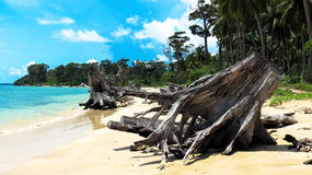 Indian Ocean Tsunami. Uprooted trees at Wandoor Beach as a result of 2004 Indian Ocean Tsunami, Port Blair, Andaman and Nicobar Islands, India, Asia Stock Images