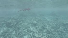 Indian Ocean, underwater reefs and a diver. Maldives video. Low contrast, desaturate. Dynamic movement stock footage