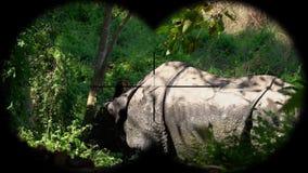 Indian One Horned Rhinoceros Rhinoceros unicornis Seen through Binoculars. Watching Animals at Wildlife Safari. Shot with a Sony RX10 IV fps 59,94 FHD stock video